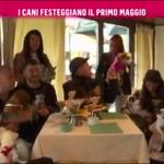 nemo-rai2-prince-and-princess-milano-dogs-bau-lunch-12