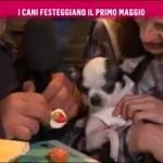 nemo-rai2-prince-and-princess-milano-dogs-bau-lunch-16