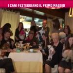 nemo-rai2-prince-and-princess-milano-dogs-bau-lunch-19