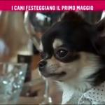 nemo-rai2-prince-and-princess-milano-dogs-bau-lunch-3