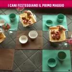 nemo-rai2-prince-and-princess-milano-dogs-bau-lunch-5